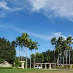 Palm Trees and beautiful blue sky and clouds in Land O' Lakes, FL f