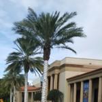 The Fine Arts Museum Saint Petersburg, Florida