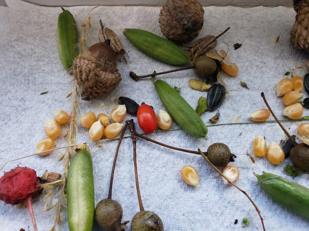 PA seeds